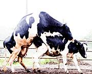千葉県酪農人会