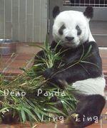 上野 パンダ