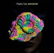 ammonite(アンモナイト)