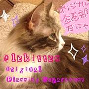 電気猫オリジナル企画部
