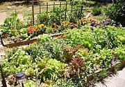 アメリカで家庭菜園