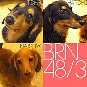 BRN48/3