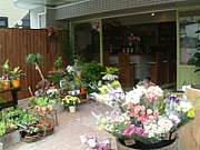 fleur & cafe  NICE
