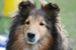 犬、ワンコ大好き新潟