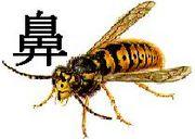M澤の鼻と蜂(大妻テニス部)