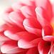 優しい花の写真