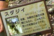 須田ゼミ王国