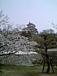 日本の桜を見守る会