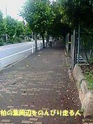 柏の葉周辺をのんびり走る人