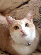 クリーム色の猫 ダイリュート