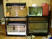 ◆金魚飼育環境◆