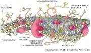 【生体膜分子のダイナミクス】