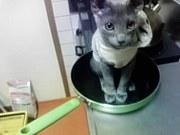 フライパン猫現わる!!