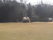 ゴルフしましょう!