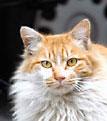 街の地域猫推進委員会