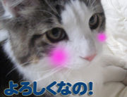 ネコ=・ω・=ネタ