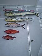 疑似餌(.ルアー)で魚を釣る会