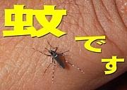 わたくしは蚊だ!!