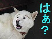 OKBとDOGの会(^ω^)