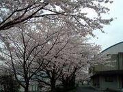 田川市立中央中学校