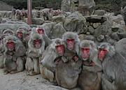 滋賀フットサル【L.S.Monkeys】
