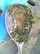 公認団体トマト(ソフトテニス)