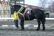北海道ばんえい競馬の歴史