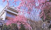 祝平成20年桜美林高等学校卒業