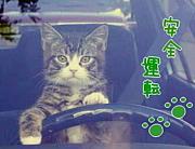 目指せ!脱ペーパードライバー