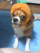 愛犬と旅行(おでかけ)