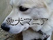 愛犬マニア