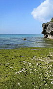 沖縄のススメ