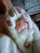 ネコの肉球写真