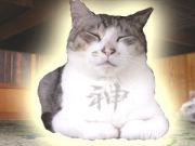 猫飼えぬ猫好教