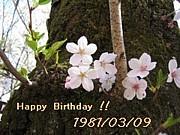 1981年3月9日生まれ