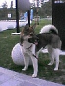 ミックス犬の好きな人
