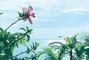 沖縄☆LIFE