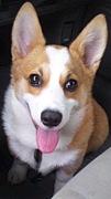愛犬と暮らす☆愛知