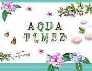 No Aqua Timez,No Life