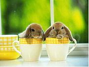ウサギとカフェ