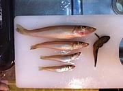 九州大学芸術工学部釣り倶楽部