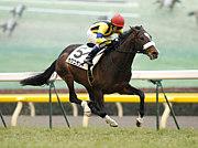 カグニザント【競走馬】