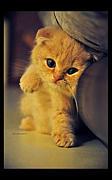 子猫が好き!(=´∀`=)