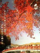 一年まるごと香嵐渓