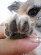 ぉ犬様の会(´ω`)