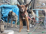 路上生活者と27匹の犬達