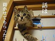 長崎大学落語研究会☆コミュ☆