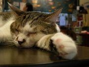 短時間睡眠生活