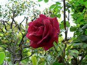 花から始まる・・・