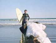 サーフィンと犬